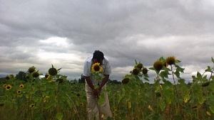 luis-sunflower-1030x579